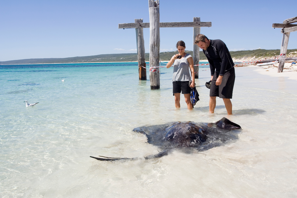 Sting Ray and Snorkeling in Hamelin Bay Beach, Margaret River